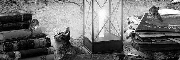 Aménagement de combles à Mouans-Sartoux 06370 | Isolation sous toiture