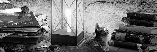 Aménagement de combles à Tonneins 47400 | Isolation sous toiture